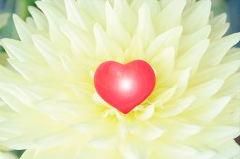 kiku-heart.jpeg